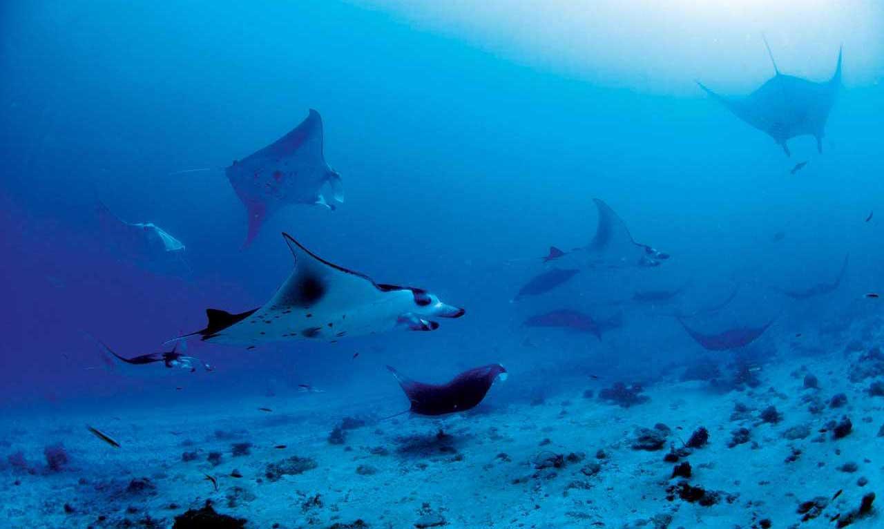 maldivlerturu-maldivler-turlari-maldivle